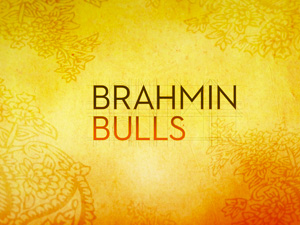 Brahmin Bulls HD trailer at vimeo.com